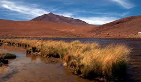 Reeds of the Desert